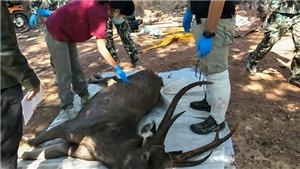 Hươu rừng ở Thái Lan chết do nuốt phải 7kg túi nhựa