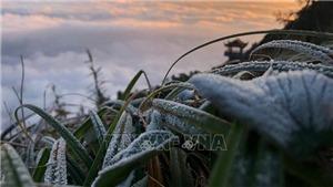 Miền Bắc sẽ rét đậm, rét hại vào nửa cuối tháng 1