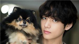 Đáng yêu như V BTS: Giúp một ARMY đặt tên siêu dễ thương cho cún cưng