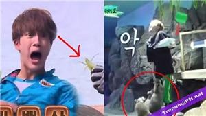 12 thần tượng Kpop không thể sống sót một mình trong tự nhiên: BTS, EXO...
