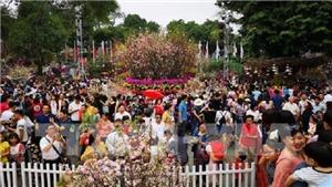 Lễ hội hoa Anh đào Nhật Bản – Hà Nội 2019 kéo dài thêm 1 ngày