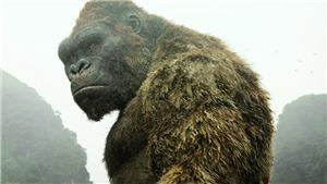 Công bố đề cử Oscar 2017: Bom tấn 'Kong: Skull Island' quay tại Việt Nam được đề cử