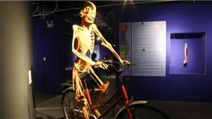 Cục Mỹ thuật, Nhiếp ảnh và Triển lãm: Triển lãm cơ thể người chỉ phù hợp với cơ sở nghiên cứu y học
