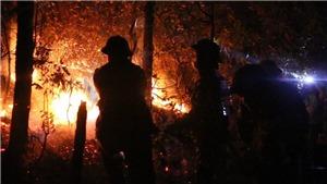 Sao Việt hướng về vụ cháy rừng ở miền Trung