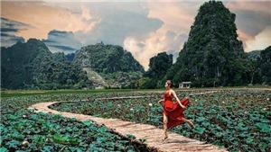 Sen nở rộ, lúa trải vàng ở Hang Múa – Ninh Bình