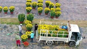 Hoa, cây cảnh hạ giá nhưng sức mua vẫn giảm