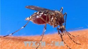 Nga cảnh báo khả năng tăng số ca nhiễm virus Tây sông Nile do thời tiết ấm hơn