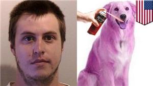 Chủ đi vắng, chó bị trộm sơn lông màu 'tím mộng mơ'