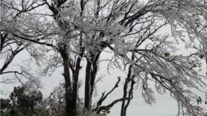 Vùng áp thấp lại mạnh lên thành áp thấp nhiệt đới, rét đậm, rét hại kéo dài đến ngày 4/1/2019