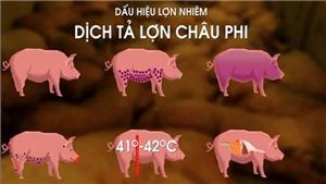CẬP NHẬT Tình hình dịch tả lợn châu Phi mới nhất