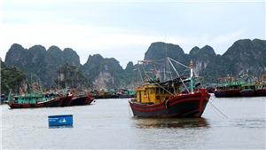 Bão số 3 giật trên cấp 12 đổ bộ các tỉnh từ Quảng Ninh đến Nam Định
