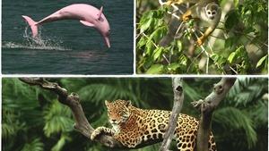 Châu Âu kêu gọi Brazil hành động chống phá rừng Amazon