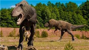 Phát hiện bằng chứng mới về sự tiến hóa của khủng long