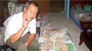 Việt Nam có tục chọi lợn không?