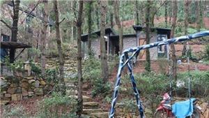 Phó Thủ tướng Trương Hòa Bình yêu cầu Hà Nội thanh tra toàn diện việc sử dụng đất rừng ở huyện Sóc Sơn