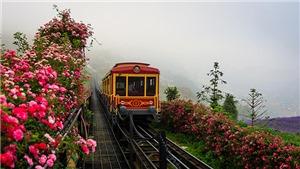 Cận cảnh thung lũng hoa hồng lớn nhất Việt Nam tại Sa Pa