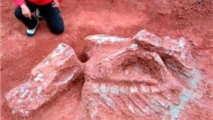 Phát hiện hóa thạch của loài động vật có vú cổ xưa nhất ở Chile